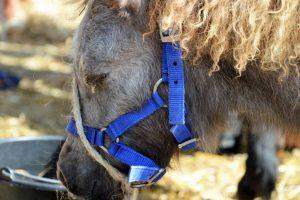 Slechte handhaving geeft drama voor de paarden en pony's