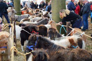 Water en paardenmarkt Zuidlaren 2017