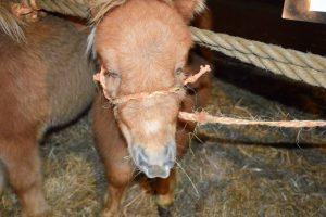 Angst regeert op paardenmarkt Hedel