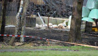 Geit word doodgeschoten door jager bij stalbrand Zeewolde