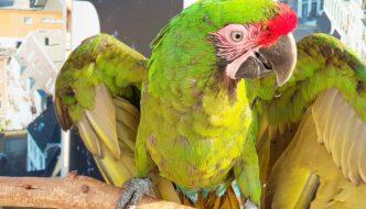 Papegaaien op boulevard Scheveningen in brandende zon