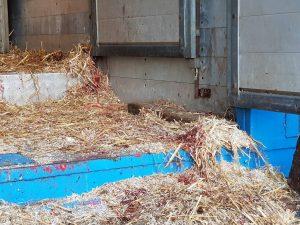 Waarnemingen op paardenmarkt Oudeschoot