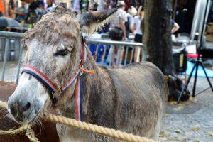 Waar de Burgemeester haar lof uitspreekt over paardenmarkt Voorschoten, spreken wij wederom van schande.