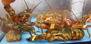 UPDATE : Vragen Van Kooten-Arissen over het bericht dat krabben en kreeften maandenlang lijden