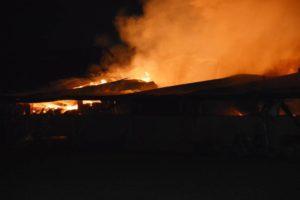 Wederom brand in koeienstal aan de Hollendewagenweg in Werkhoven. (+video)