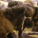 Verslag van paardenmarkt Hedel 2018 (+ 2 video's)