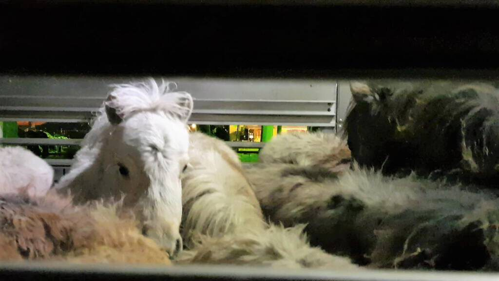 © 1037 Against Animal Cruelty