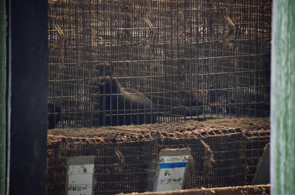 ©1037 Against Animal Cruelty/ Mijn dood, jouw luxe